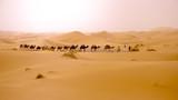 The desert of Morocco. Panoramic landscape of Sahara desert - 222435223