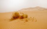The desert of Morocco. Panoramic landscape of Sahara desert - 222435248