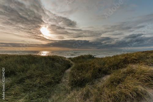 Foto Murales Dünen an der Nordsee
