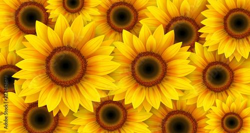 Słoneczniki tło, lato kwitnie wektorową ilustrację.