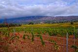 Vue panoramique sur la montagne Sainte-Victoire en automne. Les vignobles au premier plan. Provence, France.