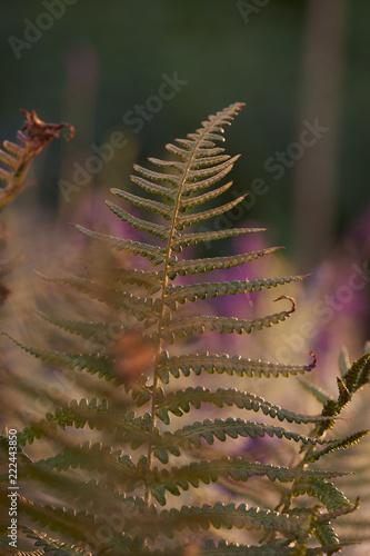 Green monring sunshine leaves in garden - 222443850