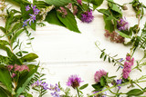 Wild flowers on a wood background. - 222458865
