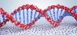Leinwandbild Motiv Close up view on spiral DNA molecules. 3D rendered illustration.