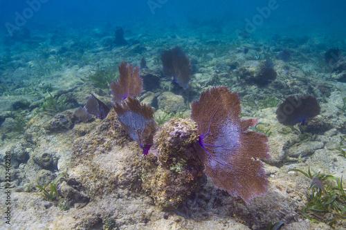 Duży koral z wentylatorem