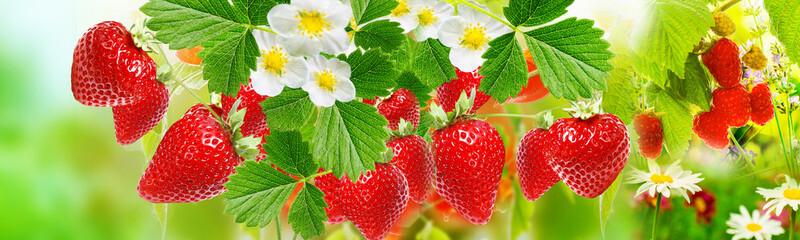 fresh summer ripe strawberries witch raspberries © red150770