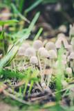 Beautiful toxic mushrooms at the forest, macro shot - 222465032
