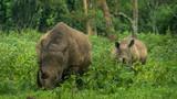 Rhino in Uganda park - 222481652