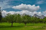 Bäume im Sommer Hintergrund Landschaft wolken blauer Himmel grünes Gras