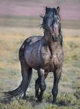 Wild Horses of Utah