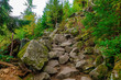 The stony path in the woods