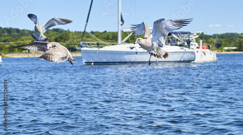 Seagulls and sailboat 298