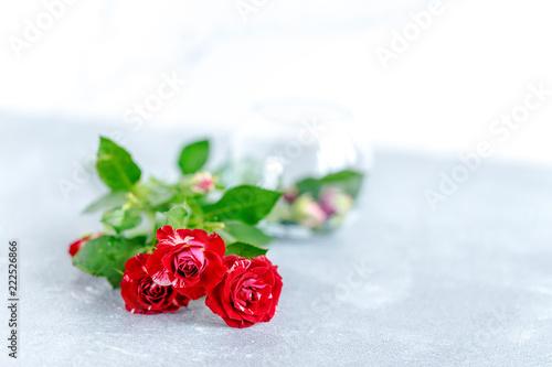 róże na białym tle