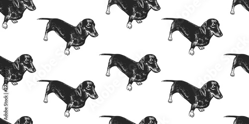 obraz PCV Seamless pattern with cute puppies of Dachshund.