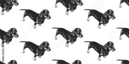 obraz lub plakat Seamless pattern with cute puppies of Dachshund.