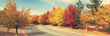 Road through colorful trees in autumn - 222536025