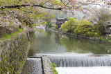 Canal with cherry blossom in Arashiyama,Kyoto