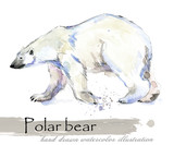 polar bear hand drawn watercolor illustration