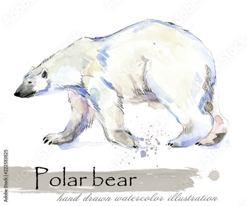 polar bear hand drawn watercolor illustration - 222583825