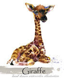 giraffe hand drawn watercolor illustration - 222584008
