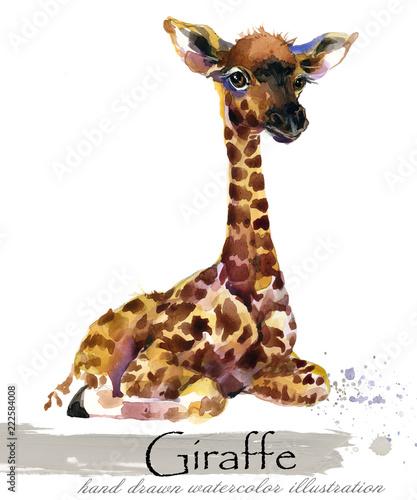 Fototapeta giraffe hand drawn watercolor illustration