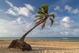 Palmtree on a beautiful beach in the caribbean