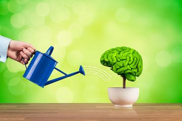 Creativity and brain function growth © Jakub Jirsák