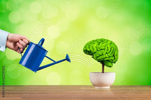 Fototapeta Creativity and brain function growth