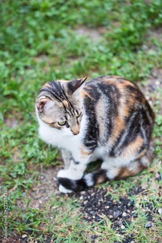 Matka kot, zabłąkany kot, kolorowy płaszcz