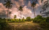 palm trees and blue sky - 222609204