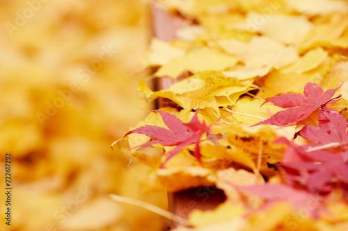 Ławka w parku z liści jesienią