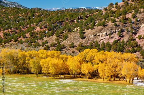 Foto Murales Landscape with autumn trees