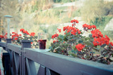 autumn terrace. Wine in a glass. Blooming balcony overlooking the river. The season of autumn and hot wine. Mulled wine for relaxation