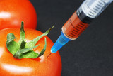 modified tomato with syringe on a black background - 222650030
