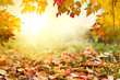 Colorful autumn leaves background - 222655893