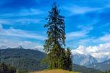 alberi landscape panorama - 222660679