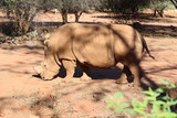 South African Animals - 222673412