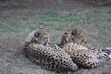 South African Animals - 222673672