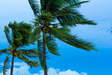 palmeras - 222679875