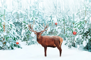 Beautiful Noble Red Deer male with big horns and Christmas tree with decoration in the snow in the festive winter forest. Artistic creative Christmas image.