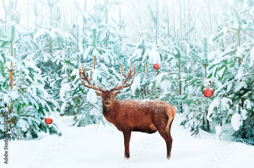 Beautiful Noble Red Deer male with big horns and Christmas tree with decoration in the snow in the festive winter forest. Artistic creative Christmas image. - 222682013