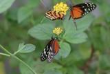 Schmetterlinge im botanischem Garten Marburg