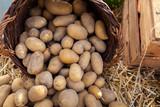 Kartoffeln / Potatoes - 222702648