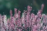 Colores primaverales - 222717044