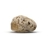 Small Sea Rock with Holes on white. 3D illustration - 222737034