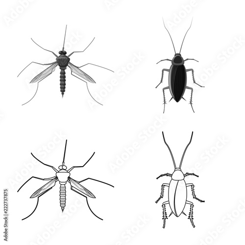 Isolated object of insect and fly logo. Collection of insect and element stock symbol for web. - 222737875
