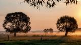Poranne mgły nad łąkami - 222745204