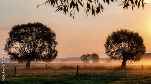 Poranne mgły nad łąkami