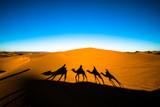 Wide angle shot of people riding camels in caravan over the sand dunes in Sahara desert with camel shadows on a sand - 222746013