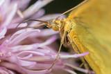 Portrait of a butterfly on a flower